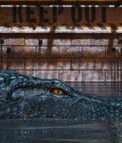 De tank van de alligator gelieve te houden uit stock illustratie