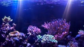 De tank van het koraalrifaquarium stock afbeeldingen