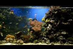 De tank van vissen royalty-vrije stock fotografie
