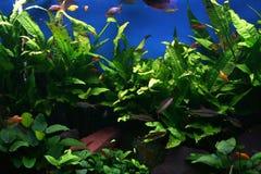 De tank van vissen Stock Foto's