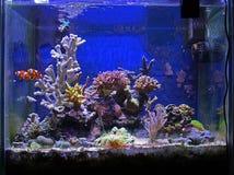 De tank van vissen en van het koraal Royalty-vrije Stock Fotografie