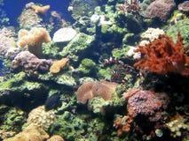 De tank van vissen met koraal en sponsen royalty-vrije stock afbeeldingen