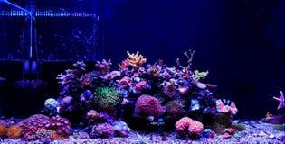 De tankscène van het koraalrifaquarium met vissen royalty-vrije stock foto's