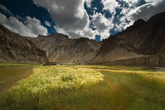 De tarwe diende landschap in dat in Marhka Vallei II wordt gevestigd stock foto