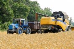 De tarwe van de maaidorserlading in de tractoraanhangwagen Royalty-vrije Stock Foto