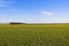 De tarwe van Yorkshire wolds Stock Afbeeldingen