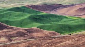 De tarwegebieden geven de contouren aan van de Palouse-heuvels stock fotografie