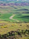 De tarwegebieden geven de contouren aan van de Palouse-heuvels royalty-vrije stock fotografie