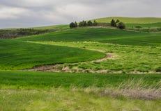 De tarwegebieden geven de contouren aan van de Palouse-heuvels stock foto's