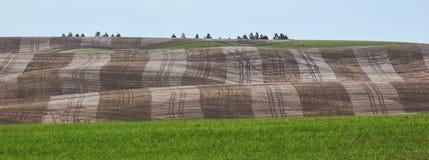 De tarwegebieden geven de contouren aan van de Palouse-heuvels royalty-vrije stock foto