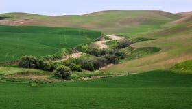 De tarwegebieden geven de contouren aan van de Palouse-heuvels royalty-vrije stock afbeeldingen
