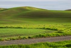 De tarwegebieden geven de contouren aan van de Palouse-heuvels royalty-vrije stock foto's