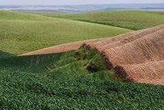 De tarwegebieden geven de contouren aan van de Palouse-heuvels stock afbeelding