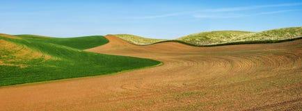De tarwegebieden geven de contouren aan van de Palouse-heuvels stock afbeeldingen