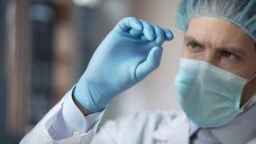 De tarwekorrel van de laboratorium deskundige holding, die steekproefkwaliteit, gewijzigde organismen analyseren stock fotografie