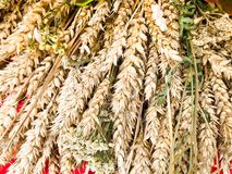 De tarweoren van droog stro van hooi verzamelden in een boeket met zaden en stelen, bladeren De achtergrond Textuur stock afbeeldingen
