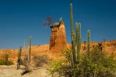 De Tatacoa-woestijn, de droogste plaats van Colombia Stock Afbeelding