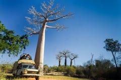 De taxi en de baobab van Bush Stock Afbeelding
