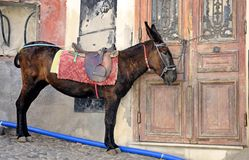 De Taxi van de ezel Royalty-vrije Stock Fotografie