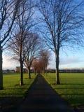 De te bewandelen weg met naakte bomen in Dublin, Ierland Royalty-vrije Stock Foto's