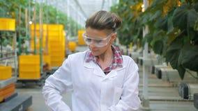 De technicus van het vrouwenlaboratorium met tablet die zich in gebouw van agroholding bevinden stock videobeelden