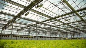 De technologie van het kweken van installaties in industriële serres stock footage