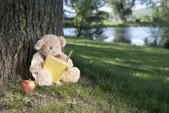 De teddybeer van de lezing Stock Afbeeldingen