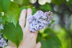 De tedere macro van tak purpere lilac bloemen in openlucht Royalty-vrije Stock Foto's