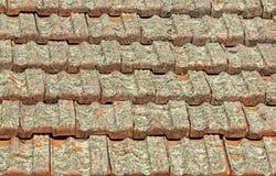 De Tegels van het terracottadak in Lichen Fungus worden behandeld dat stock afbeelding