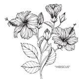 De tekening en de schets van de hibiscusbloem stock illustratie