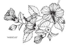 De tekening en de schets van de hibiscusbloem royalty-vrije illustratie