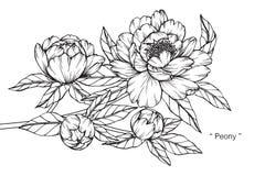 De tekening en de schets van de pioenbloem royalty-vrije illustratie