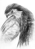 De tekening van de adelaar Royalty-vrije Stock Foto's