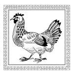 De tekening van de kip scetch Stock Foto