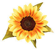 De tekening van de zonnebloem Stock Foto's