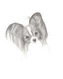 De Tekening van het potlood van een Leuke Hond Papillon Royalty-vrije Stock Afbeelding