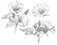 De tekeningsbloem van de hand Royalty-vrije Stock Fotografie