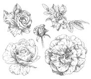 De tekeningsbloem van de hand Royalty-vrije Stock Foto