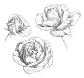 De tekeningsbloem van de hand Royalty-vrije Stock Foto's