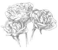 De tekeningsbloem van de hand Royalty-vrije Stock Afbeelding