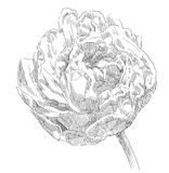 De tekeningsbloem van de hand Stock Afbeelding