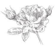 De tekeningsbloem van de hand Stock Afbeeldingen