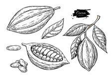De tekeningsreeks van cacao vectorsuperfood Organische gezonde voedselschets royalty-vrije illustratie