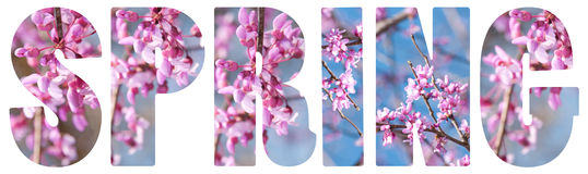 De tekst van de lente op wit royalty-vrije stock foto's