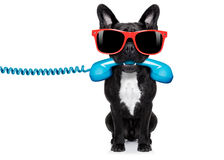 De telefoon van de hondtelefoon Stock Fotografie