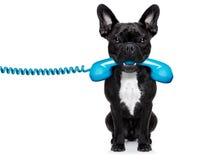De telefoon van de hondtelefoon Royalty-vrije Stock Afbeeldingen