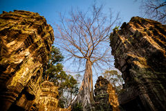 De tempel Angkor Wat van Ta Prohm Royalty-vrije Stock Foto's