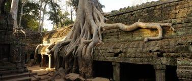 De tempel van de Angkorera door reuzewortels die wordt overwoekerd van royalty-vrije stock foto