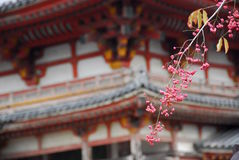 De tempel van de pruimbloesem Stock Afbeeldingen