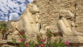 De Tempel van Karnak stock video